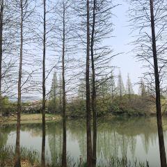 尚湖水上森林用戶圖片
