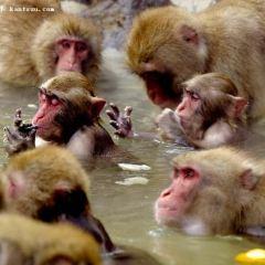 福岡市立動植物園用戶圖片