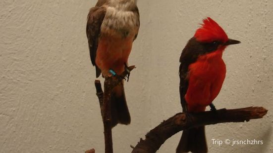 Bird Museum of Mexico