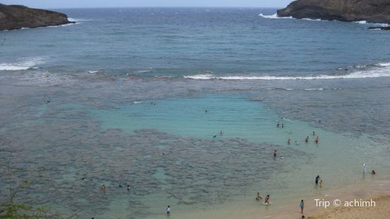 Hanauma Bay Snorkeling Excursions  / Tommy's Tours -- CLOSED
