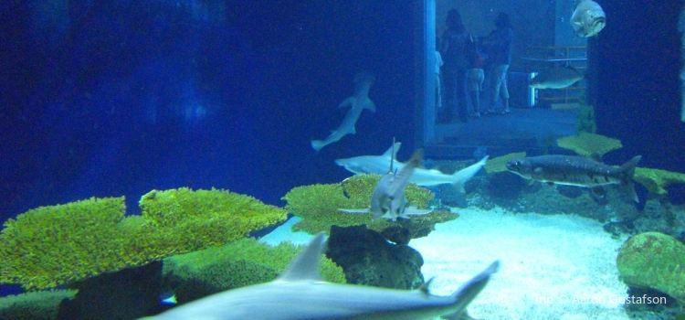 Audubon Aquarium of the Americas2