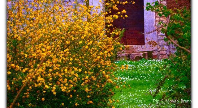 Jardin Lecoq2