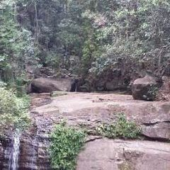 Buderim Forest Park User Photo