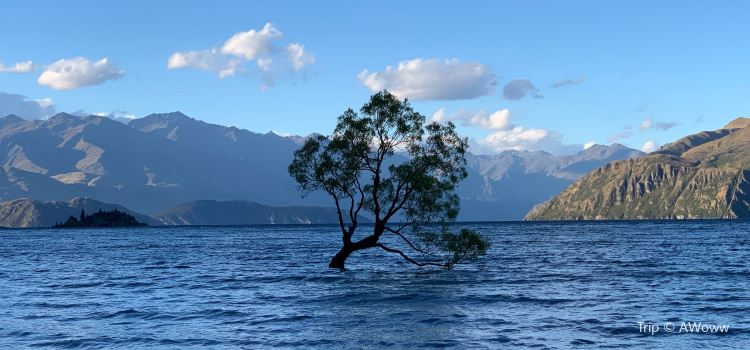 That Wanaka Tree2
