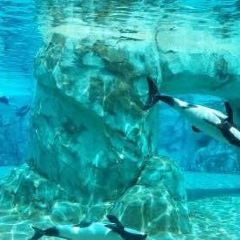 Aquatica海洋世界水上樂園用戶圖片