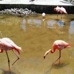 奧蘭多鱷魚樂園用戶圖片