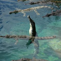 Crocosaurus Cove User Photo