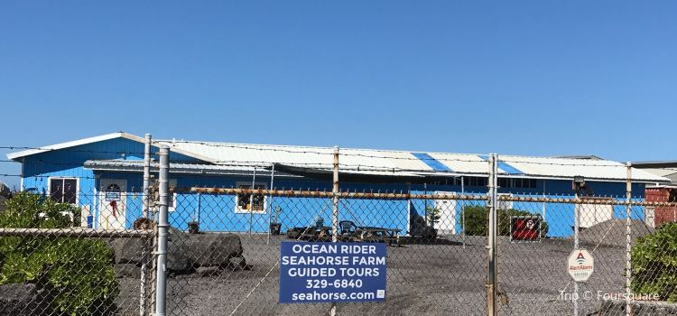 Ocean Rider Seahorse Farm3