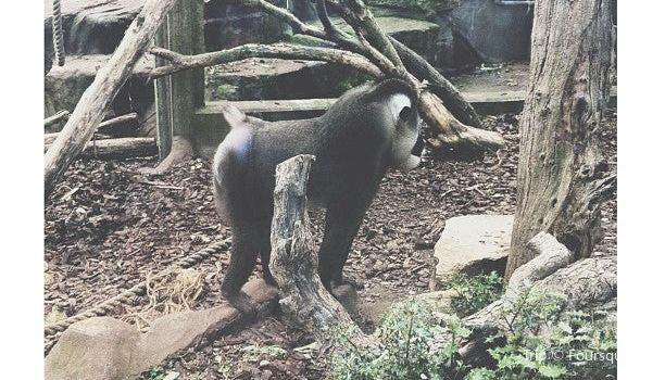 Bristol Zoo Gardens2