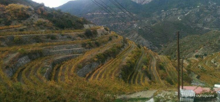 Tsiakkas Winery2