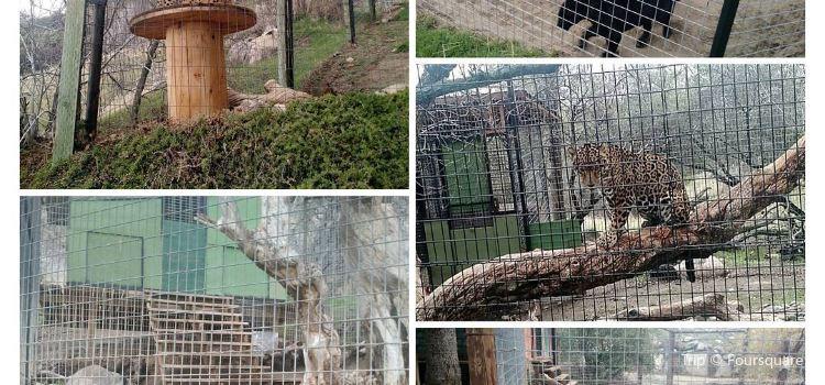 Project Survival's Cat Haven