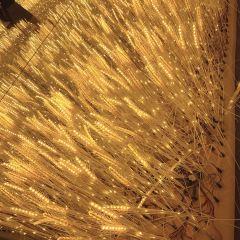 摩帕斯光影星光藝術館用戶圖片