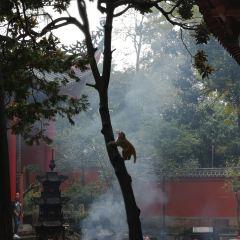 弘福寺用戶圖片