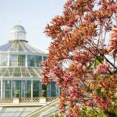 University of Copenhagen Botanical Garden User Photo