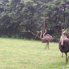 Montecasino Bird Sanctuary User Photo