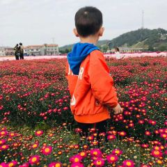臨湘菊花博覽園用戶圖片