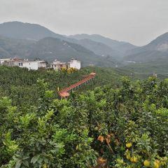 高寨村用戶圖片