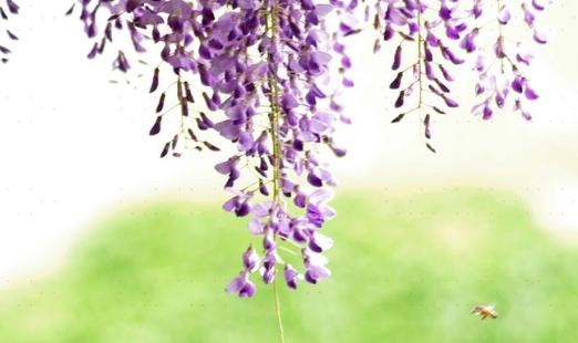 洞天公園紫騰園