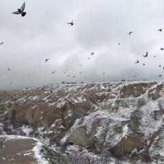 Pigeon Valley User Photo