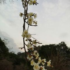 스먼국가삼림공원 여행 사진