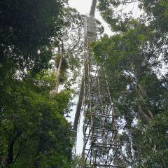 Ulu Temburong National Park User Photo