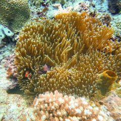 黑珍珠潛水旅遊中心用戶圖片