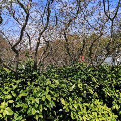 金華鳳凰山公園用戶圖片