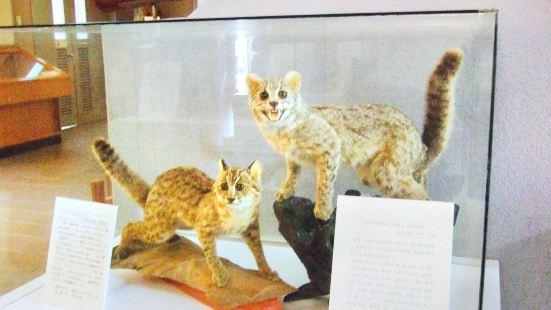 Tsushima Folk History Museum
