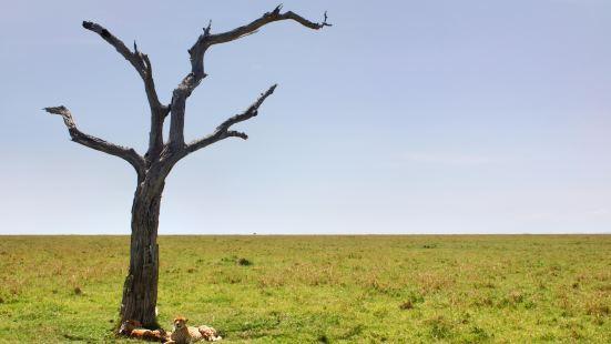 阿魯沙國家公園