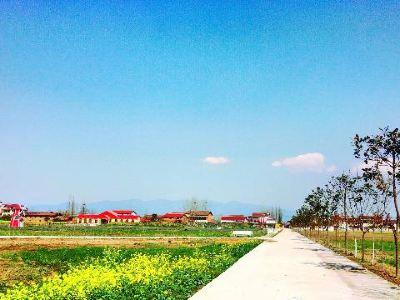 Hanzhong Lavender Garden