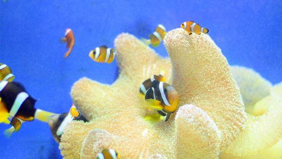 Longmen Aquarium
