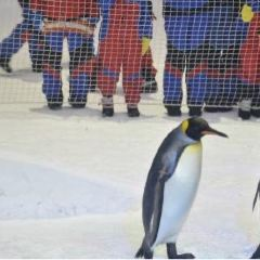 Snow Penguins at Ski Dubai User Photo