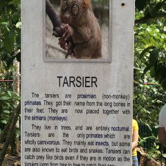 Philippine Tarsier Sanctuary User Photo