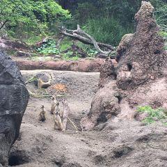 Disney Animal Kingdom User Photo