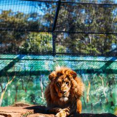 Billabong Koala and Wildlife Park User Photo