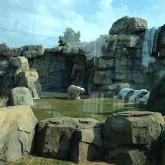Kansas City Zoo用戶圖片