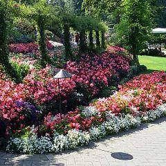 布查特花園用戶圖片