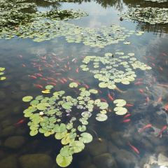 Baimajian Ecological Garden User Photo