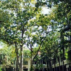 Silpakorn University User Photo