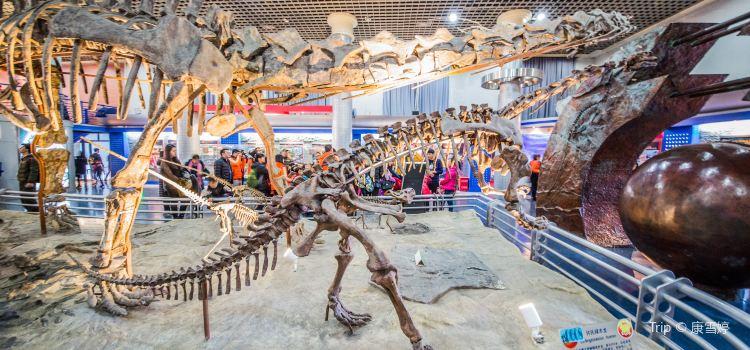 Beijing Museum of Natural History3