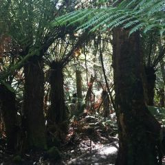 Mole Creek Karst National Park User Photo