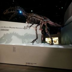 The Houston Museum of Natural Science User Photo