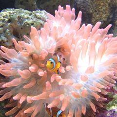 蘭卡威海底世界用戶圖片
