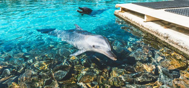 Gold Coast Sea World3