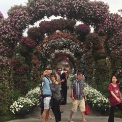 Miracle Garden User Photo