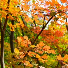 관문산 국가삼림공원 여행 사진