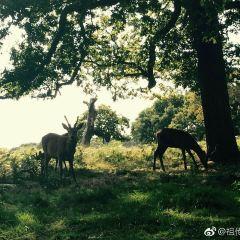 Richmond Park User Photo