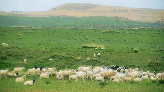 Hudong Sheep Breeding Farm