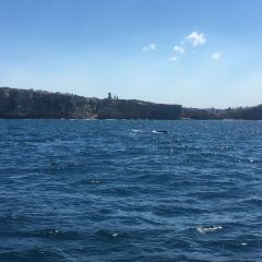 Ocean Tracker Dolphin Watching Cruise User Photo