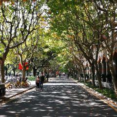 Shanghai Jiao Tong University User Photo